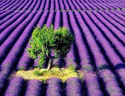紫色的初夏
