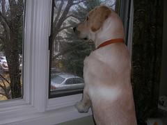 Rocky listening to thunder