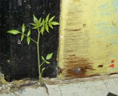 planty_closeup