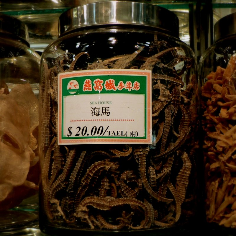 Chinatown - Dried Seahorses for Sale