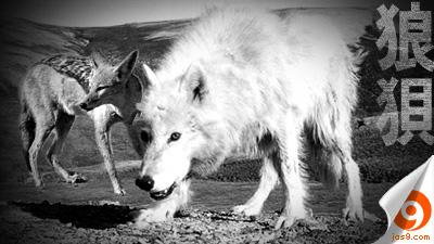 wolf & jackal