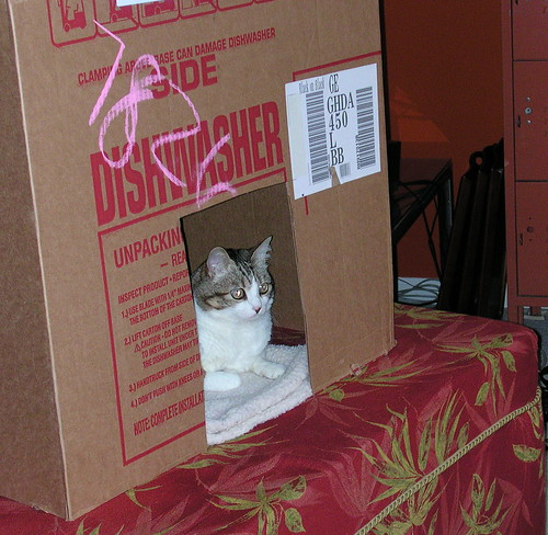 Esther and the dishwasher box