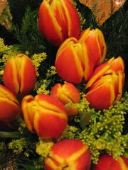 Tulipes pel meu sant (2)