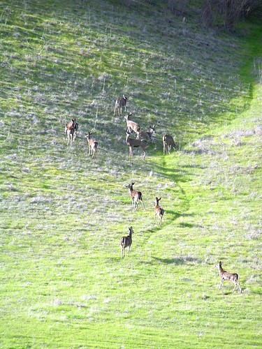 deer going up the mountain