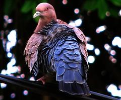 Fly away skyline pigeon...fly away... photo by neloqua