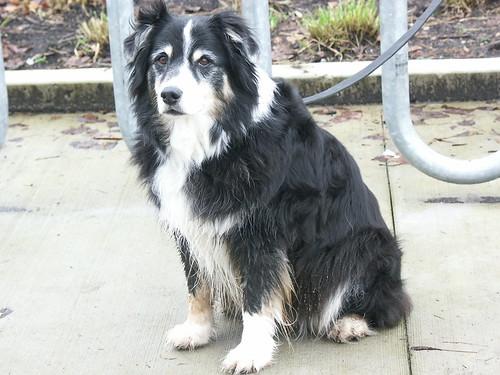 Honden weer welkom in binnenstad Vlissingen