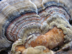 Found Fungi