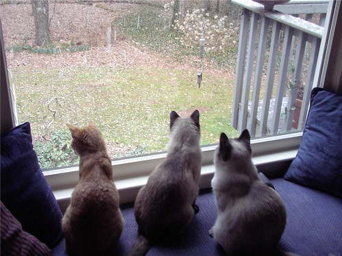 Cats see first snow
