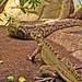 lizard 'n' snake