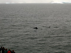 ANT2005 - Whale Watching, part 1