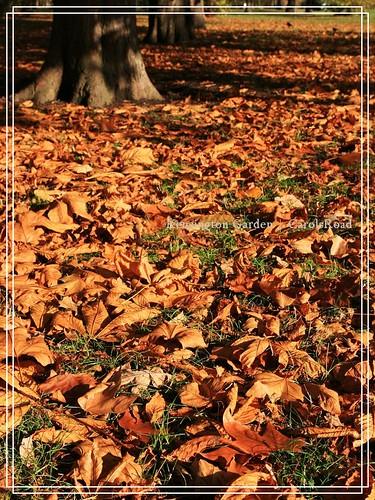 2009-11-07 Kensington Garden 014