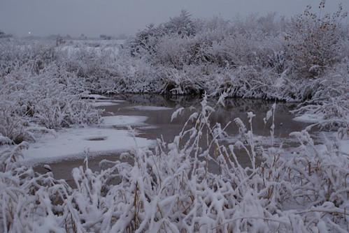 small frozen pond