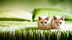 Kittens Green photo by Momento Creative