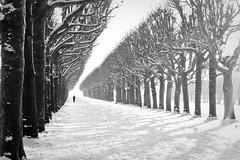 Parc de l'Observatoire, sous la neige photo by VérOooo