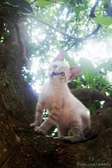 meu lindinho ♥ photo by .DéDy.