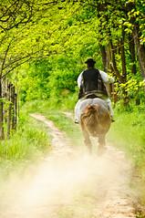 Riding the Horse photo by Sergiu Bacioiu