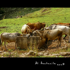 Al fontanile - Colored edition photo by in eva vae