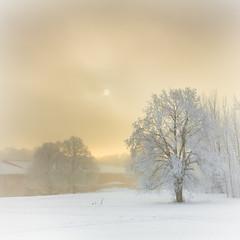 Winter, Gärdet photo by Hannes R