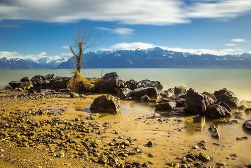 Lac Léman in Lausanne