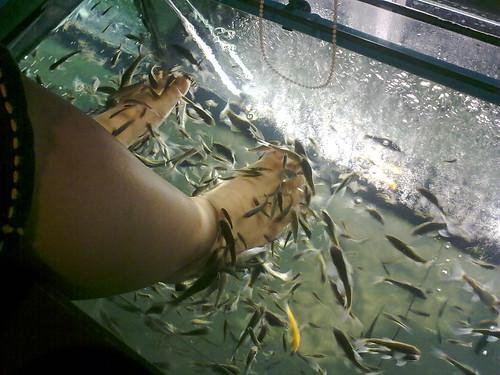 Ikan pada rebutan