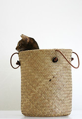 Basket_cat_8280 photo by y_and_r_d