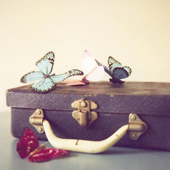 the butterfly travels photo by SusannahT
