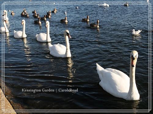 2009-11-07 Kensington Garden 018