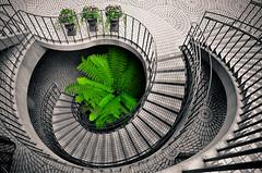 Green photo by Ame Otoko
