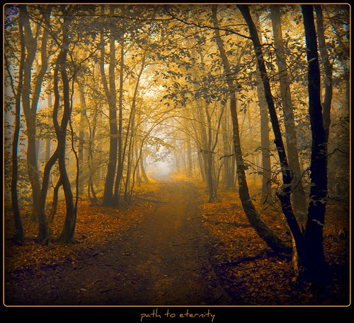 im Hohlweg -  path to eternity photo by NPPhotographie