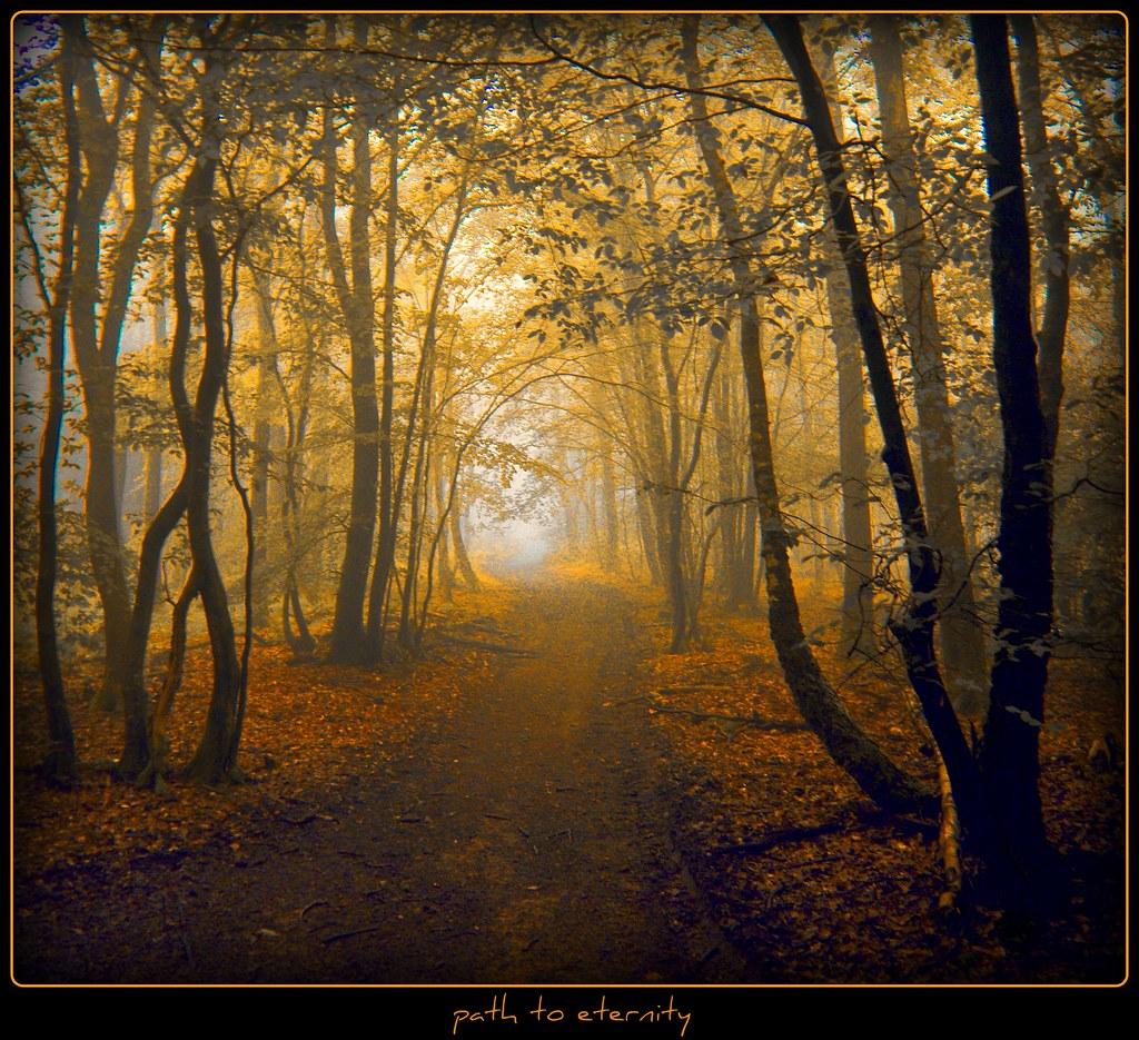im Hohlweg -  path to eternity photo by NPPhotographie