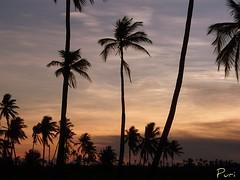 Brazil Sunset!! photo by puri_