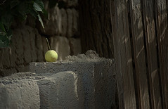 1166 A little green apple---China photo by ngchongkin