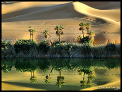 Umm El-Ma'a  Oasis Lake ! photo by Bashar Shglila