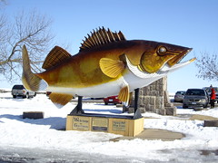Giant Walleye in Garrison, MN