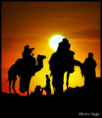 Camels Silhouettes ! photo by Bashar Shglila