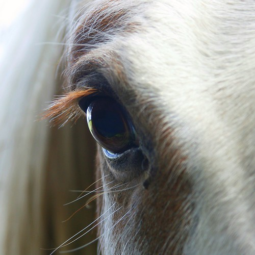 How To Determine The Best Horse Supplements
