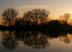 Reflected Trees photo by mazzy43