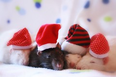 Dreaming and waiting for Christmas photo by Honey Pie!