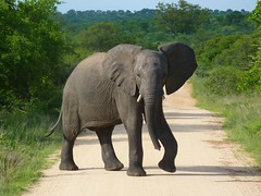Kruger National Park, South Africa photo by deji.fisher