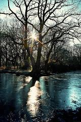 cold morning sun photo by tilman paulin