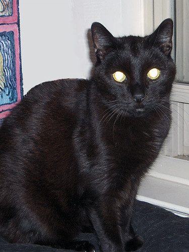 obie is 16 5 years old and hes been with us since he was a kitten