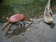 YVR Crab