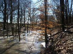 icy woods 1