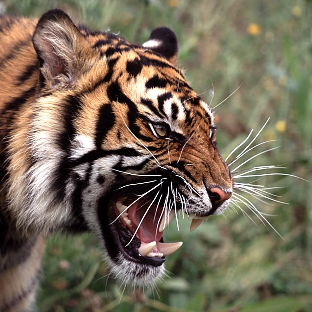 幼儿 动物牙齿