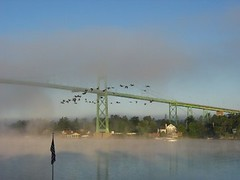 Morning Fog (and Canadian Geese)