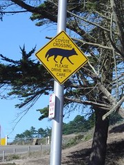 Koyote Crossing