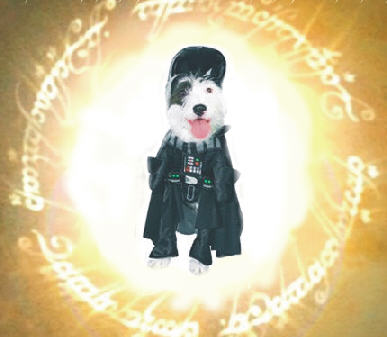 Dog Vader's ring