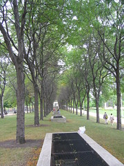 Allee of trees near Daley Bicentennial Plaza