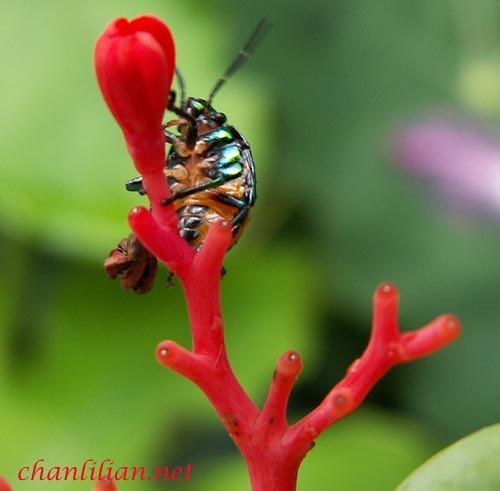 beetle2