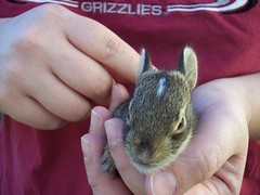 Bunny in Hand